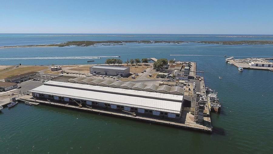 Lota de Olhão é a mais importante da região. Foram vendidas  5 mil toneladas de peixe durante os primeiros nove meses