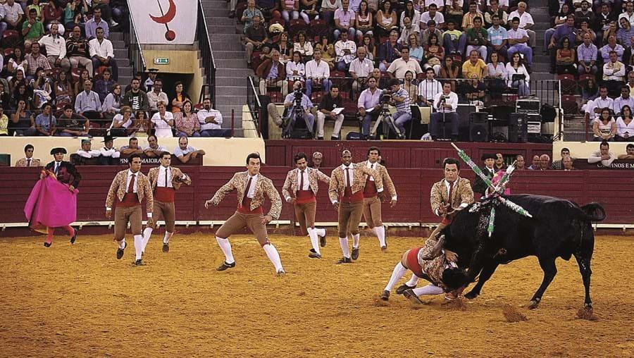 As corridas de touros voltam a estar no centro da polémica com uma proposta do PAN que o Governo acolheu