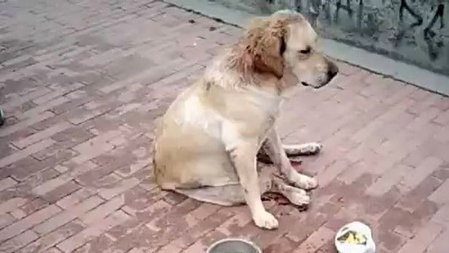 Animal foi encontrado em agonia na rua