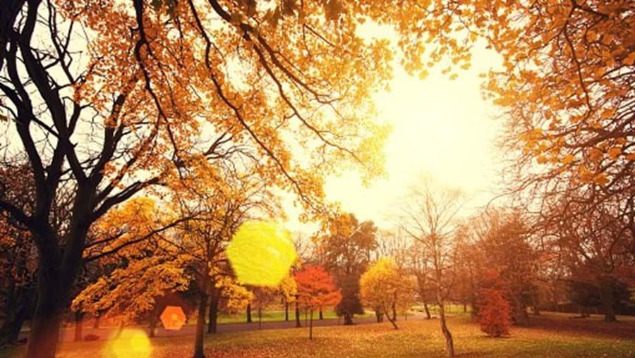 Outono xx
