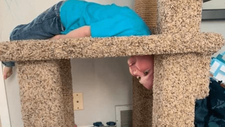 Menino de 6 anos fica com cabeça presa em buraco de árvore para gato