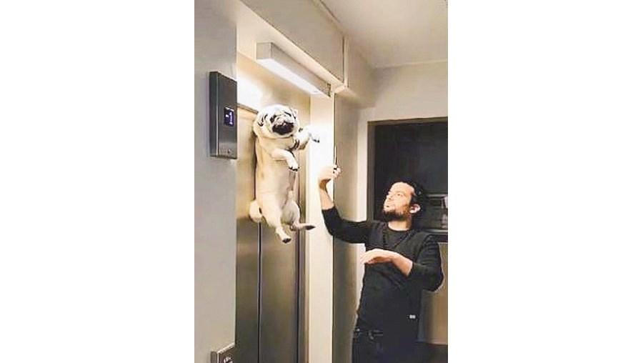 Cão fica pendurado em porta de elevador