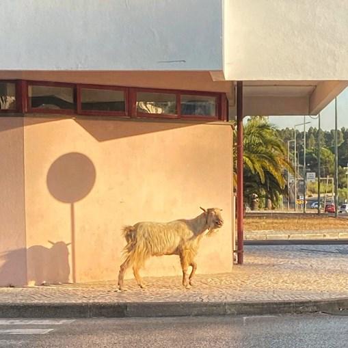 Hospital Amadora-Sintra em dia de confinamento recebe visitas inesperadas e de ... quatro patas. As imagens falam por si
