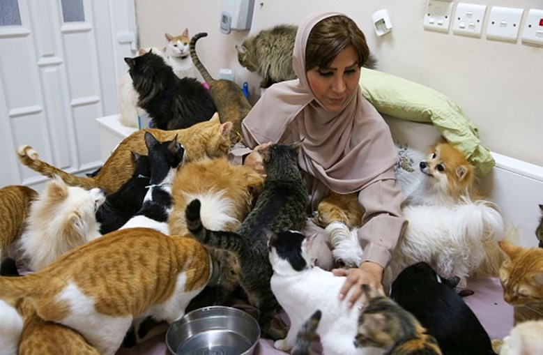Mulher vive com 480 gatos e 12 cães