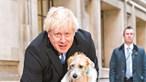 Boris Johnson diz que o seu cão teve Covid-19
