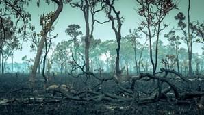Amazónia perdeu 2,3 milhões de hectares de floresta em 2020