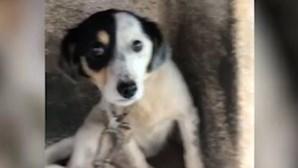Moradores resgatam cães acorrentados e sem condições de higiene de casa em Tomar. Veja as imagens