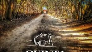 Quinta de Alcube lança vinhos de edição limitada para este Natal