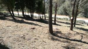 Vila Real planta 5 mil árvores e reabilita área afetada pelos incêndios