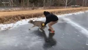 Homem salva veado em lago gelado nos Estados Unidos