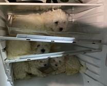 Polícia alemã resgatou cães bebés de frigoríficos