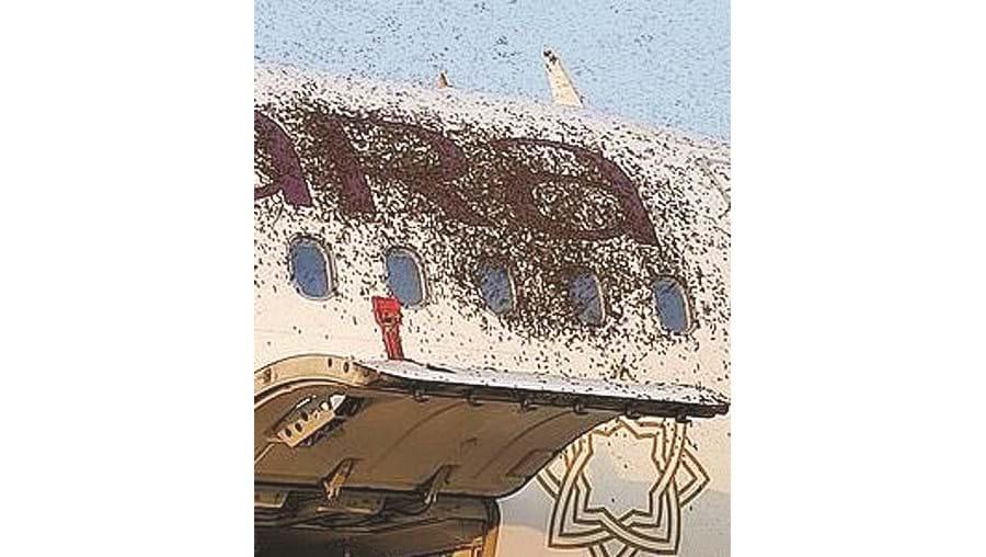 Abelhas 'atacam' aviões na Índia