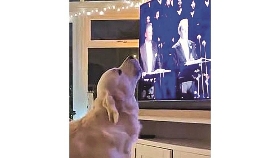 Cão canta ópera em frente à televisão