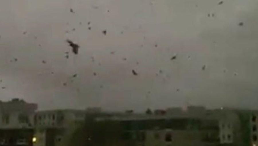 Milhares de corvos pintam céu de negro e lançam medo de apocalipse