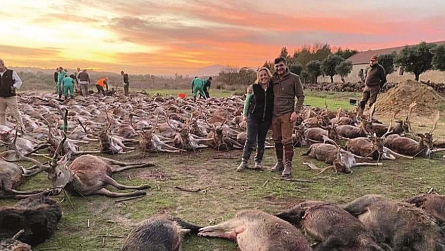 Caçadores abateram 540 animais em dois dias, numa montaria que há uma semana chocou o País