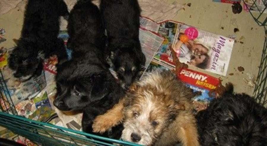 Polícia encontrou várias raças de cães, escondidos em frigoríficos de três casas na Alemanha