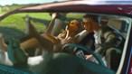 Homem dá boleia a jovem voluntária para a violar no carro