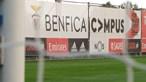 Covid-19 ataca no Benfica: Detetados 17 novos casos desde sábado