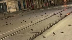"""""""Massacre"""": Fogo de artifício em Roma mata centenas de pássaros"""