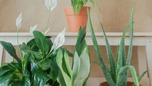 Curae: o novo projeto português de adoção de plantas para promover o bem-estar