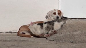 Sanny, a cadela grega que amamenta os amigos felinos