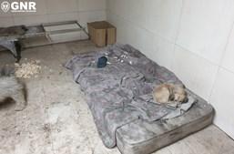 Casal albergava 22 cães dentro de padaria. Estabelecimento encerrado por falta de condições de higiene. Veja as imagens