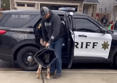 Cão polícia atingido a tiro tem alta e é recebido como um verdadeiro herói