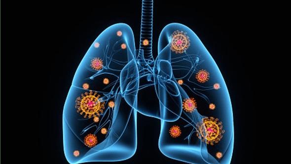 Cientistas identificam células nos pulmões que melhoram defesas contra vírus da gripe
