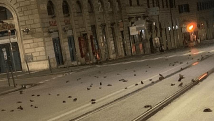 'Massacre': Fogo de artifício em Roma mata centenas de pássaros