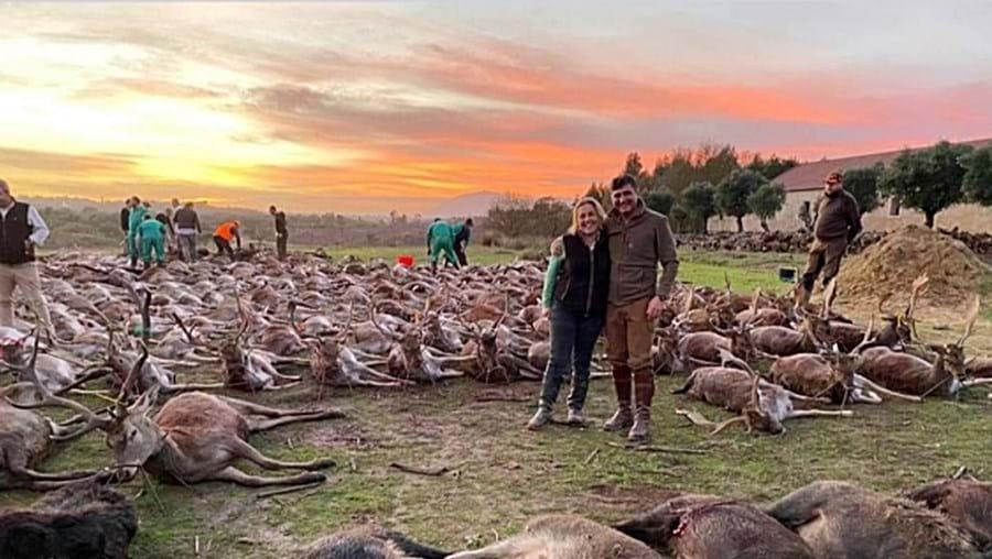 Caçadores mataram 540 animais a 17 de dezembro. Caso provocou indignação