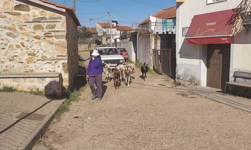 Surto atingiu mais de 50 dos cerca de 180 habitantes da aldeia de Maladão, no concelho de Arganil. Quatro morreram e outros tantos continuam hospitalizados