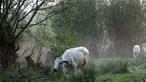 Facebook pune fotografia com vacas a pastar por ser conteúdo 'demasiado sensual'