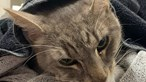 Gato 'herói' morre a salvar duas crianças de uma das cobras mais venenosas do mundo