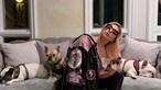 Cães de Lady Gaga devolvidos em segurança após responsável dos animais ter sido atingido a tiro