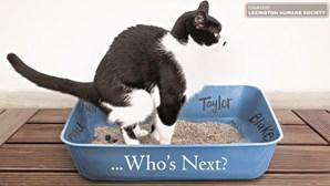 Associação de animais lança iniciativa para escrever nomes de 'ex' em caixas de areia de gatos