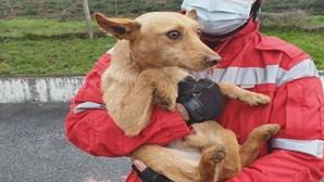 Bombeiros de Arcos de Valdevez resgatam cão de contentor