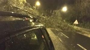 Árvore de grande porte cai e corta saída da A5 à chegada a Lisboa. Veja a imagem