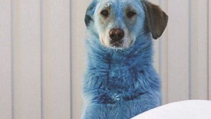 Sete cães de pelo azul encontrados junto a uma antiga fábrica de vidro na Rússia