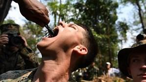 Fuzileiros navais dos EUA comem lagartixas vivas e bebem sangue de cobra. PETA alerta para risco de pandemia