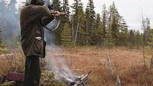 """Excesso de javalis reabre caça para """"correção extraordinária da densidade"""""""
