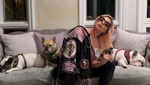 Cães de Lady Gaga roubados em ataque sangrento