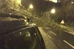 Queda de árvore na A5