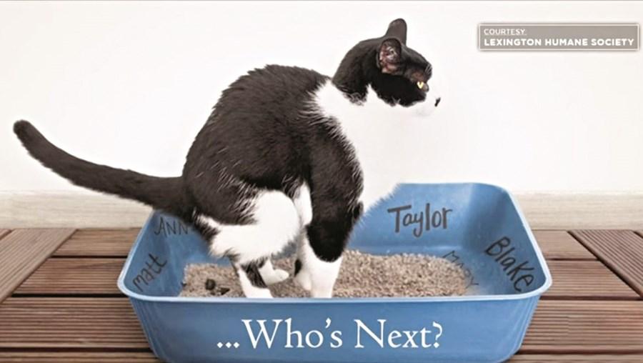 Caixa de gatos