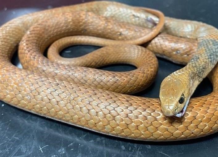 Gato 'Arthur' salvou crianças de ataque de cobra