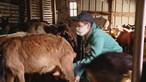 Dinis, o pastor mais novo do País que aos 13 anos já escolheu a sua profissão