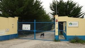 Centro em pânico com libertação e regresso de homicidas de Lucas Miranda