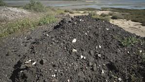 Denúncia de poluição no estuário do Sado em Setúbal