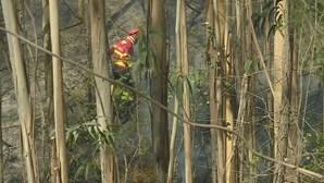 Incêndio em Santa Maria da Feira combatido por um meio aéreo e 55 operacionais