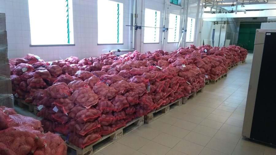 Dois mil sacos de batatas-doces vão ser distribuídos nos dois hospitais