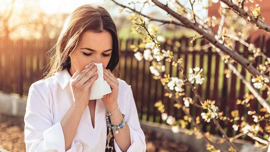 Pólen pode diminuir resposta do sistema imunitário respiratório